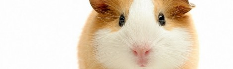 How would you like to be my guinea pig?